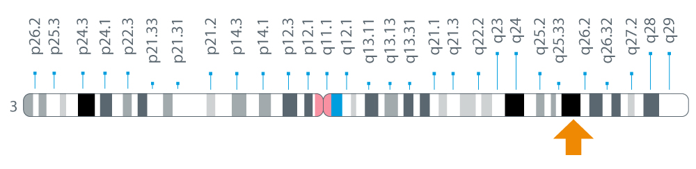 Location of the SI gene on chromosome 3 at position 26.1