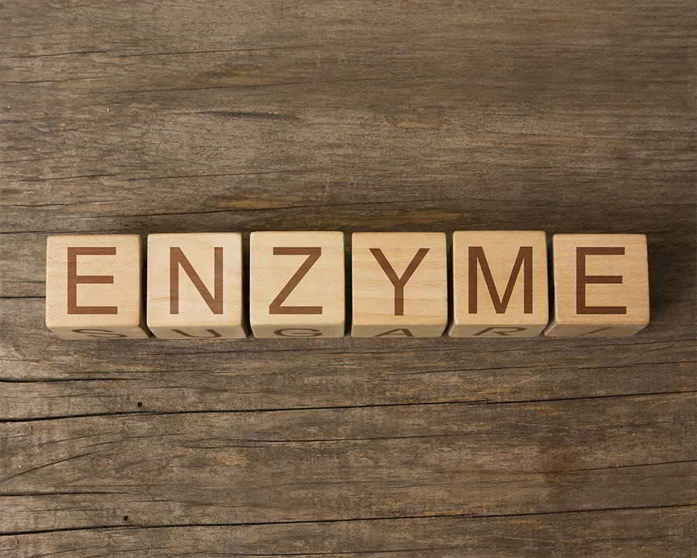Enzyme - A Naturally-Occurring Protein